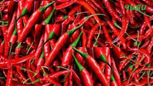 Красный острый перец чили: в чем его польза и возможный вред для здоровья