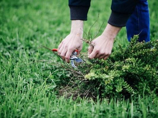 Как бороться с сорняками на своём дачном участке