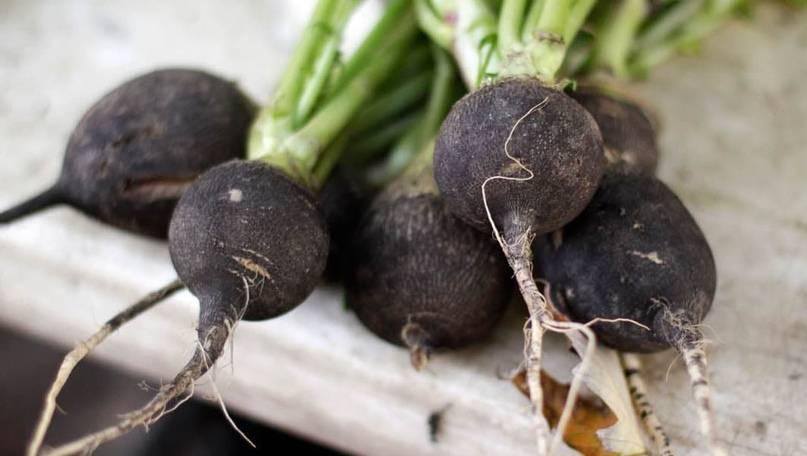 Секреты обильного урожая редьки. как правильно выбрать сорт и вырастить вкусный и полезный овощ?