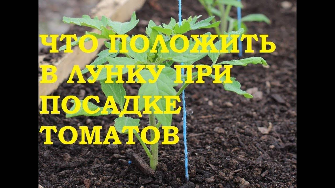 Удобрение синьор помидор — химический состав, применение, видео