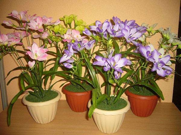 Выращивание фрезии в домашних условиях - проращивание, видео
