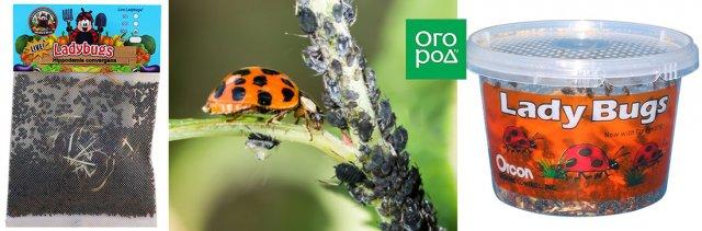 Полезные советы садоводам: как привлечь пчел на свой участок