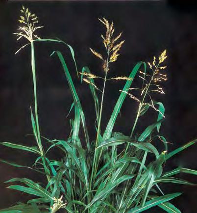 Найболее распространенные сорняки в саду: классификация, вред и польза сорных растений