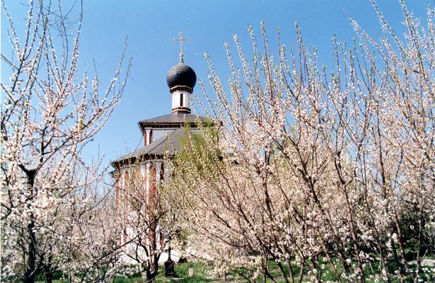 Абрикос - посадка и уход в средней полосе россии, морозостойкие сорта