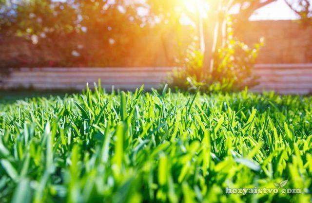 Удобрение для газона осенью, весной и летом