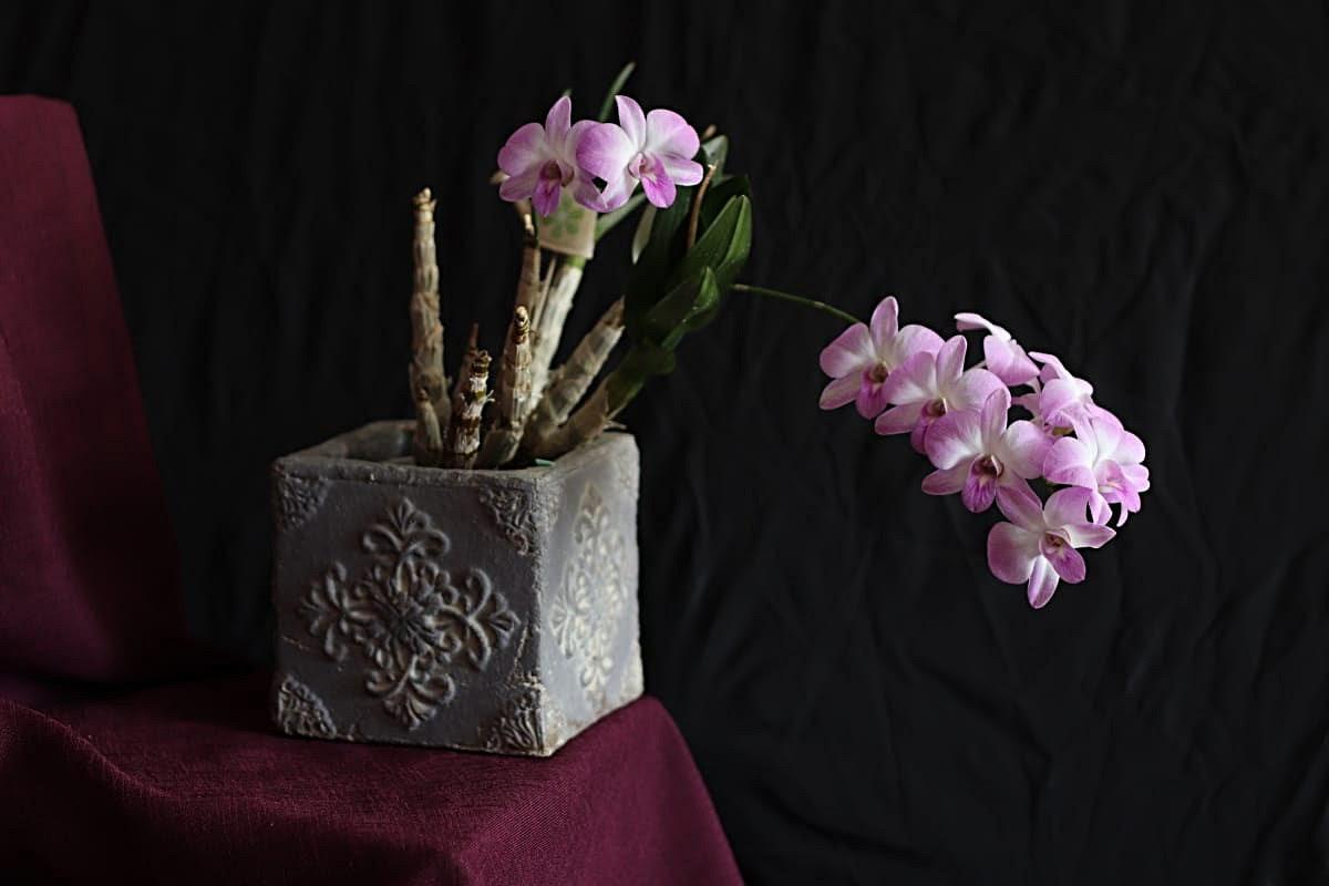 Экзотичная черная орхидея: описание, особенности ухода, болезни и вредители