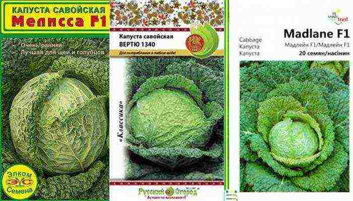 Когда и как цветет капуста? выращивание капусты на семена