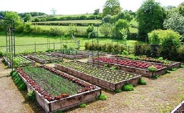 Севооборот овощных культур на дачном участке, таблица