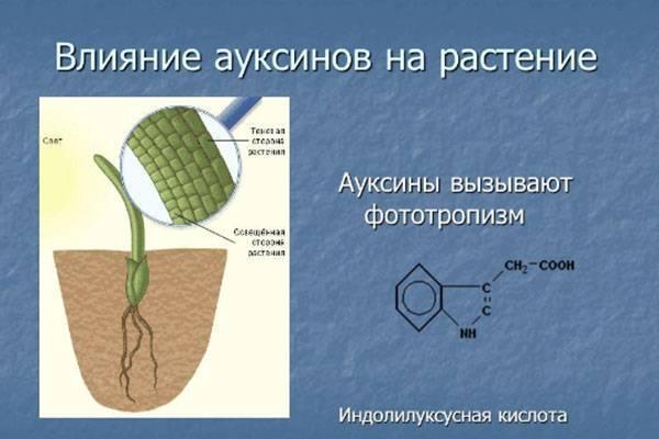 Стимуляторы корнеобразования – химия или природа?