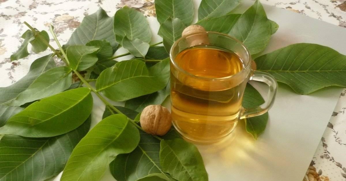 Чай из листьев грецкого ореха польза и вред