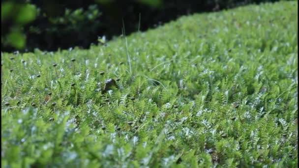 Как бороться с сорняками, мхом, лишайниками на газоне — советы