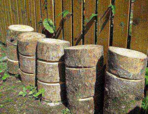 Выращивание вешенок на пнях на даче