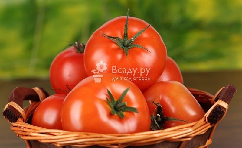 Как помидоры влияют на кишечник. польза помидоров для организма: почему полезно кушать свежие и соленые помидоры