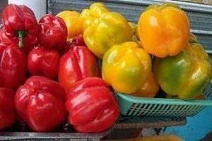 Ранний сорт перца для сибири: особенности и описание разновидностей