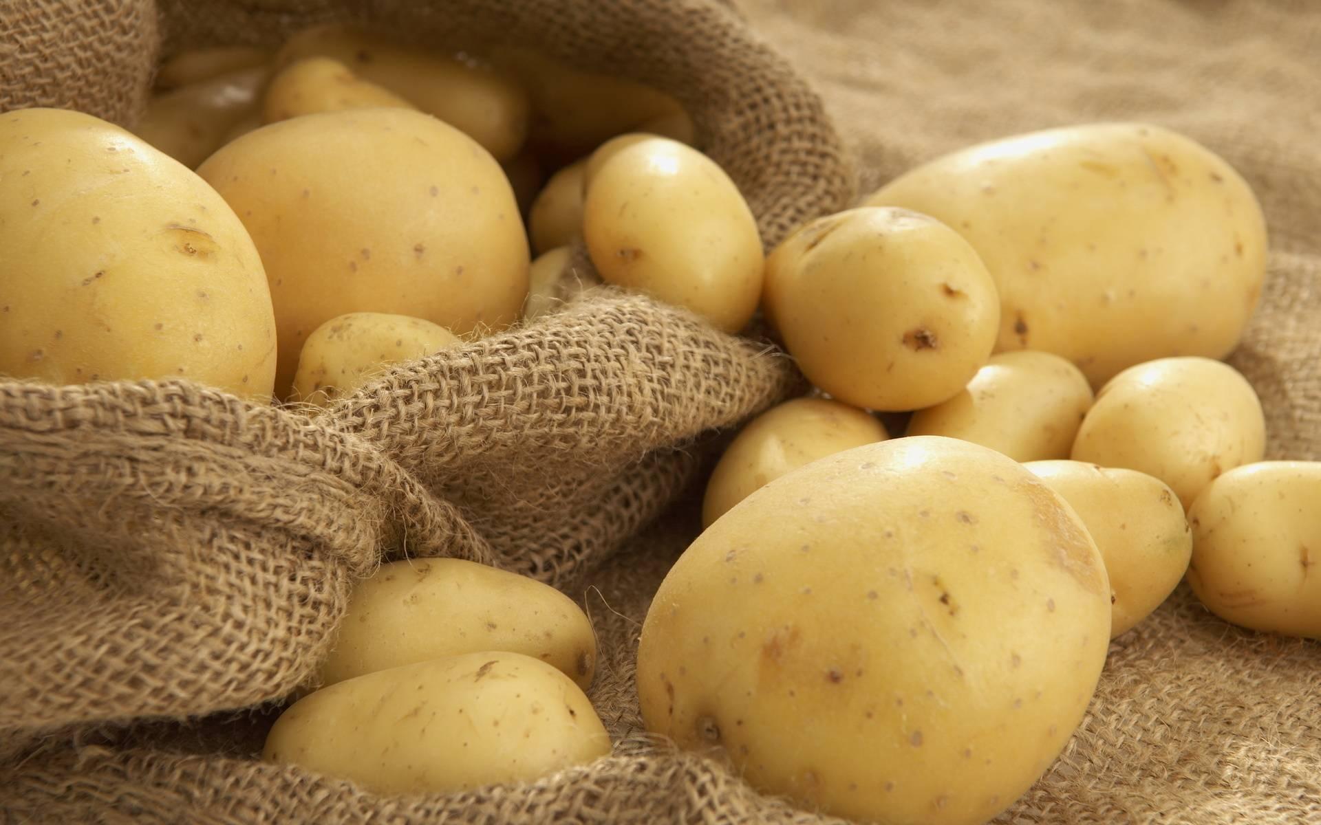Когда копать картошку: признаки и сроки созревания, способы уборки картофеля