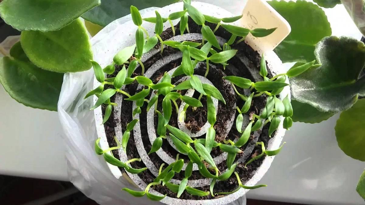Почему для комнатных растений грунт нужно подбирать индивидуально