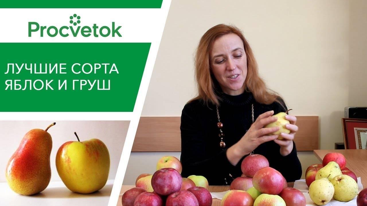 Лучшие сорта яблонь: описание и характеристика