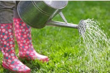 Ухаживаем за газоном весной: полезные рекомендации