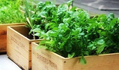 Правильное зимнее хранение семян