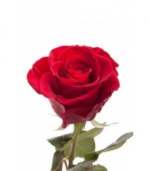 Дачный вопрос: розы посадка и уход