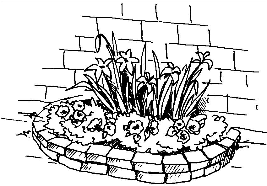 Декоративные виды и сорта крокусов
