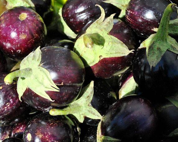 """Хорошие сорта баклажанов для открытого грунта: лучшие ранние и среднеспелые сорта """"синеньких"""""""