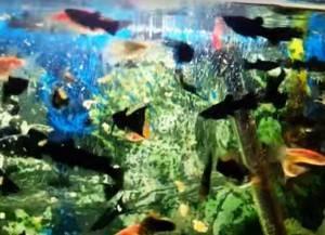 Корм для аквариумных рыбок: виды, как подобрать