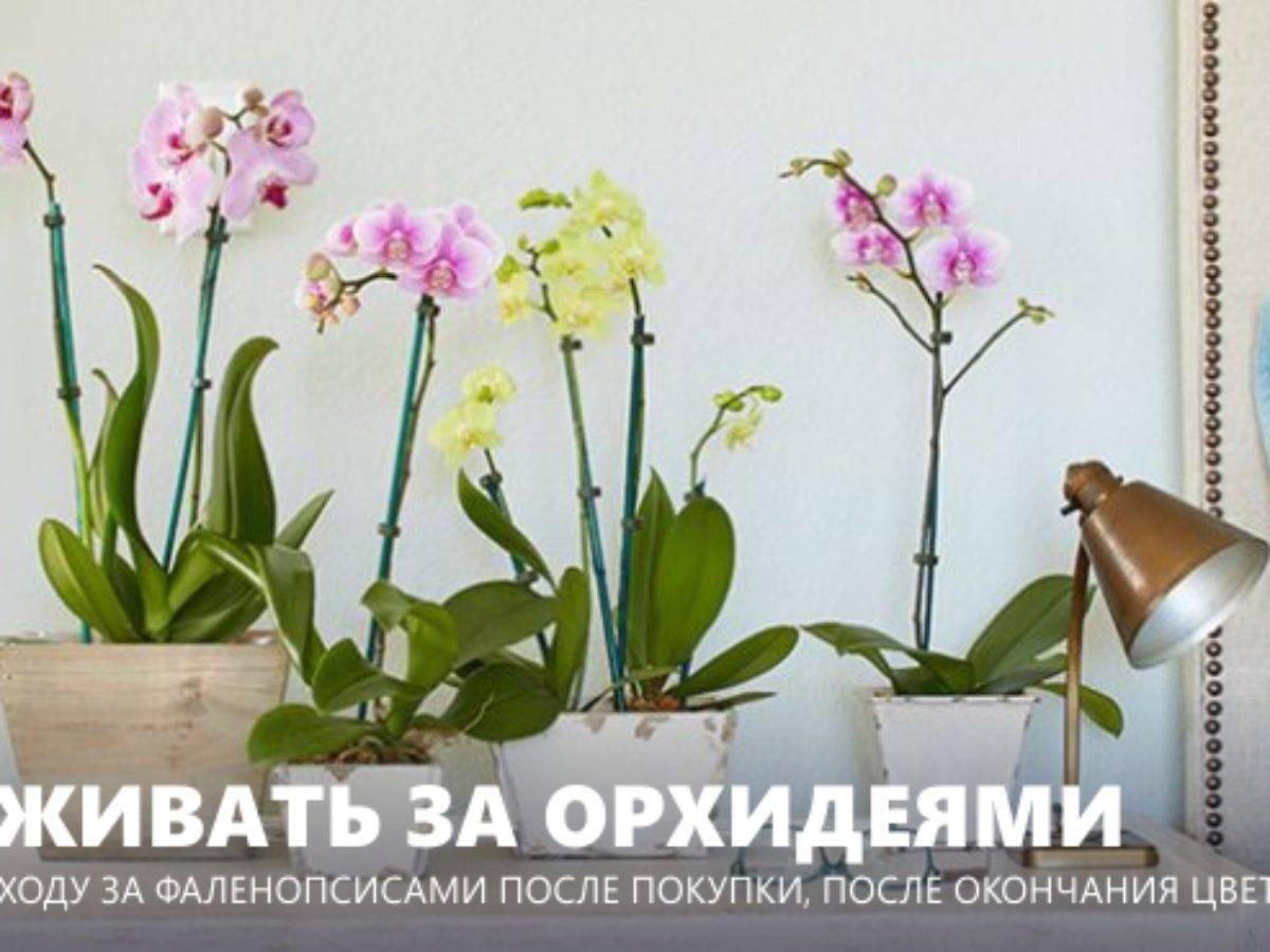 Как выбрать лучшее удобрение для орхидей?