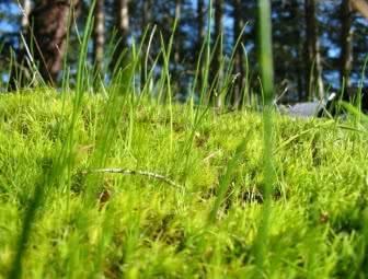 Мох на газоне — как бороться