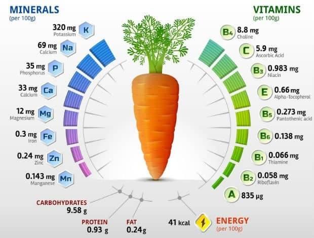 Польза и вред моркови для организма