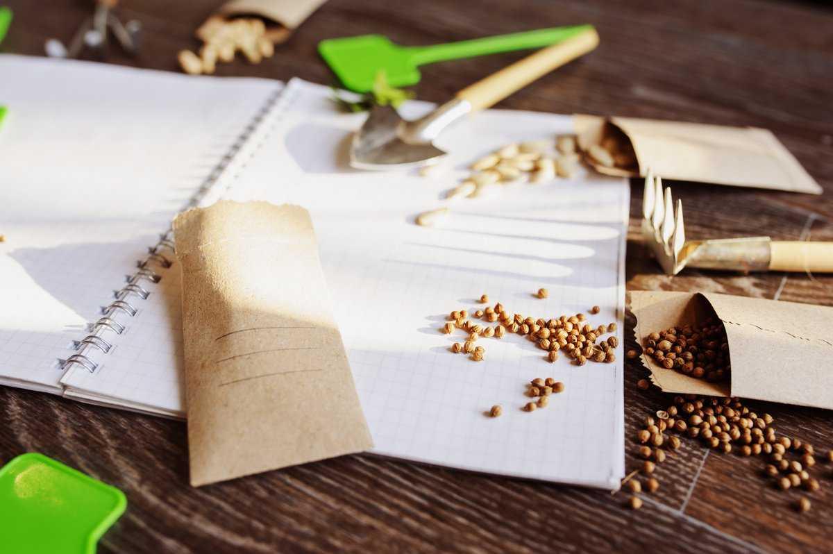 Стратификация семян многолетников – подробная инструкция с фото