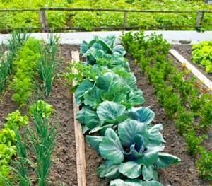 Выбираем удачное сочетание растений при посадке по таблице совместимости