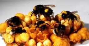 Какой инвентарь для пчеловодства нужен начинающему пасечнику