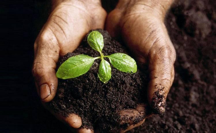 Как проводится стратификация семян в домашних условиях