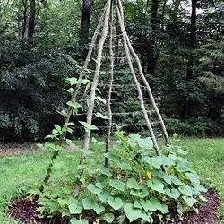 Как выращивать огурцы в бочках: посадка, уход, сбор урожая