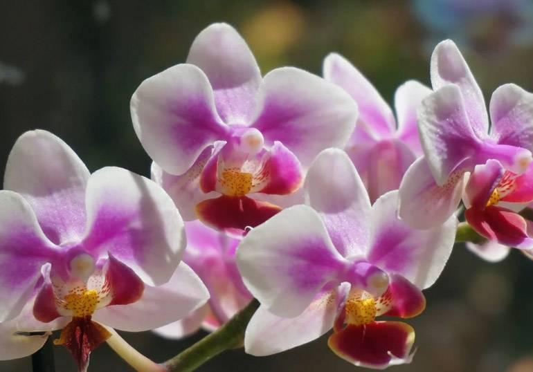 Подкормка орхидей во время цветения в домашних условиях