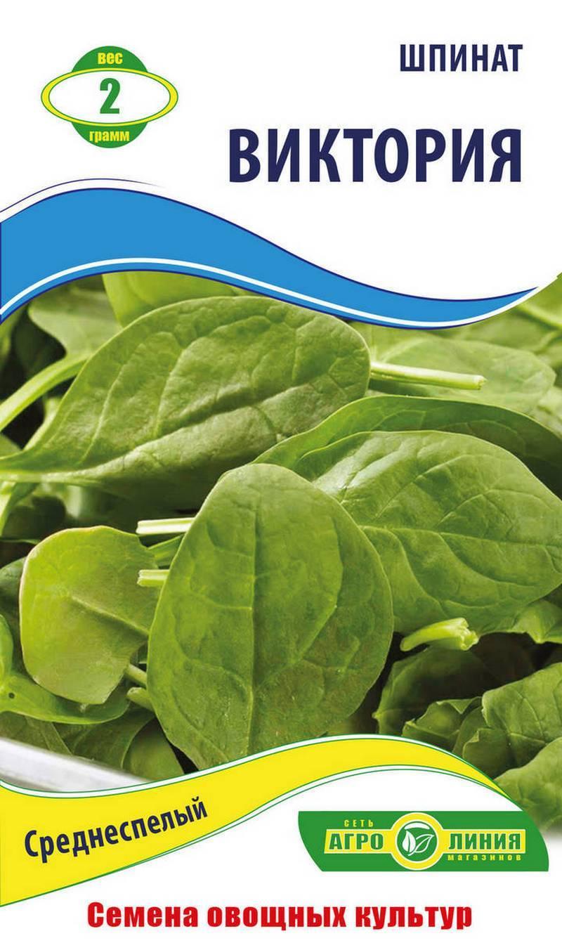 Полезнейшая зелень — шпинат. советы, как правильно его приготовить и употреблять в пищу