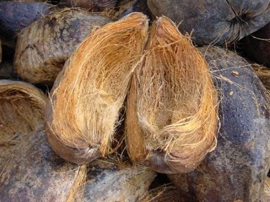 Кокосовый субстрат: свойства и использование для рассады