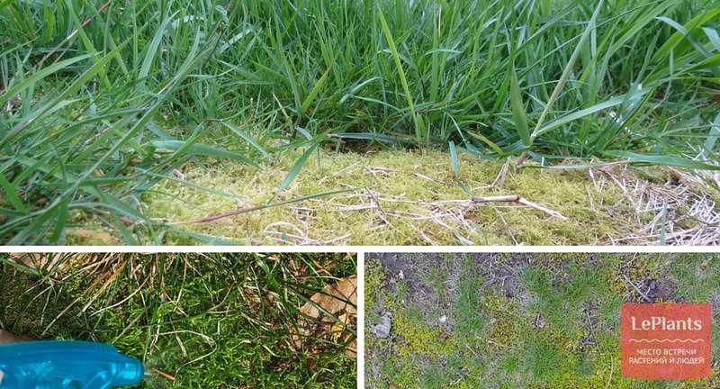 Как избавиться от мха на газоне: 4 совета и 9 способов