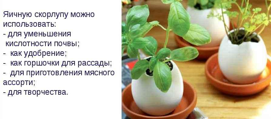 Особенности применения яичной скорлупы для огорода