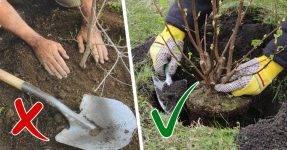 Какие деревья и кустарники лучше сажать осенью и почему?