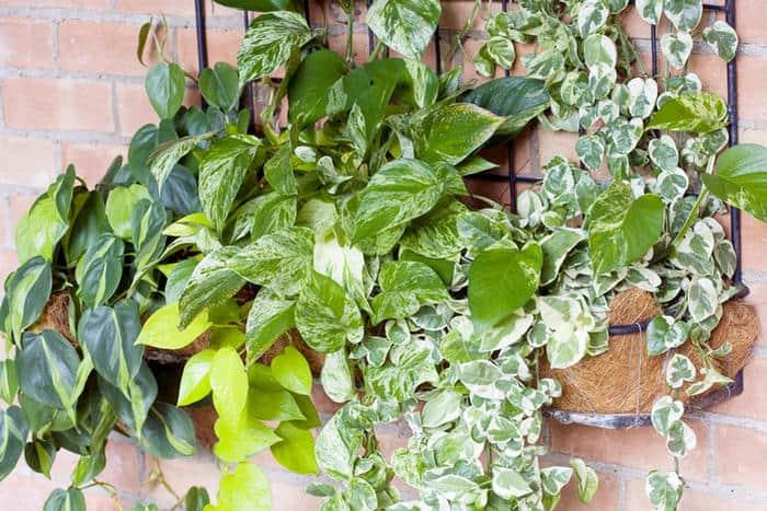 Эффектный папоротник адиантум: уход в домашних условиях фото и особенности выращивания декоративно-лиственного растения
