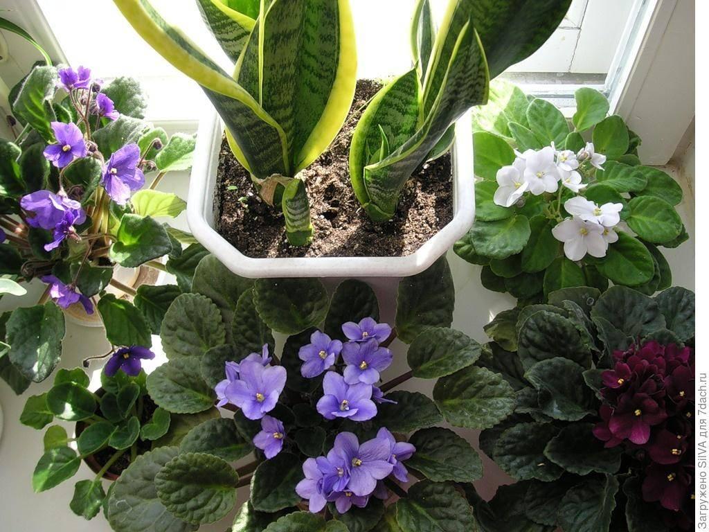 Адаптация комнатных растений после покупки