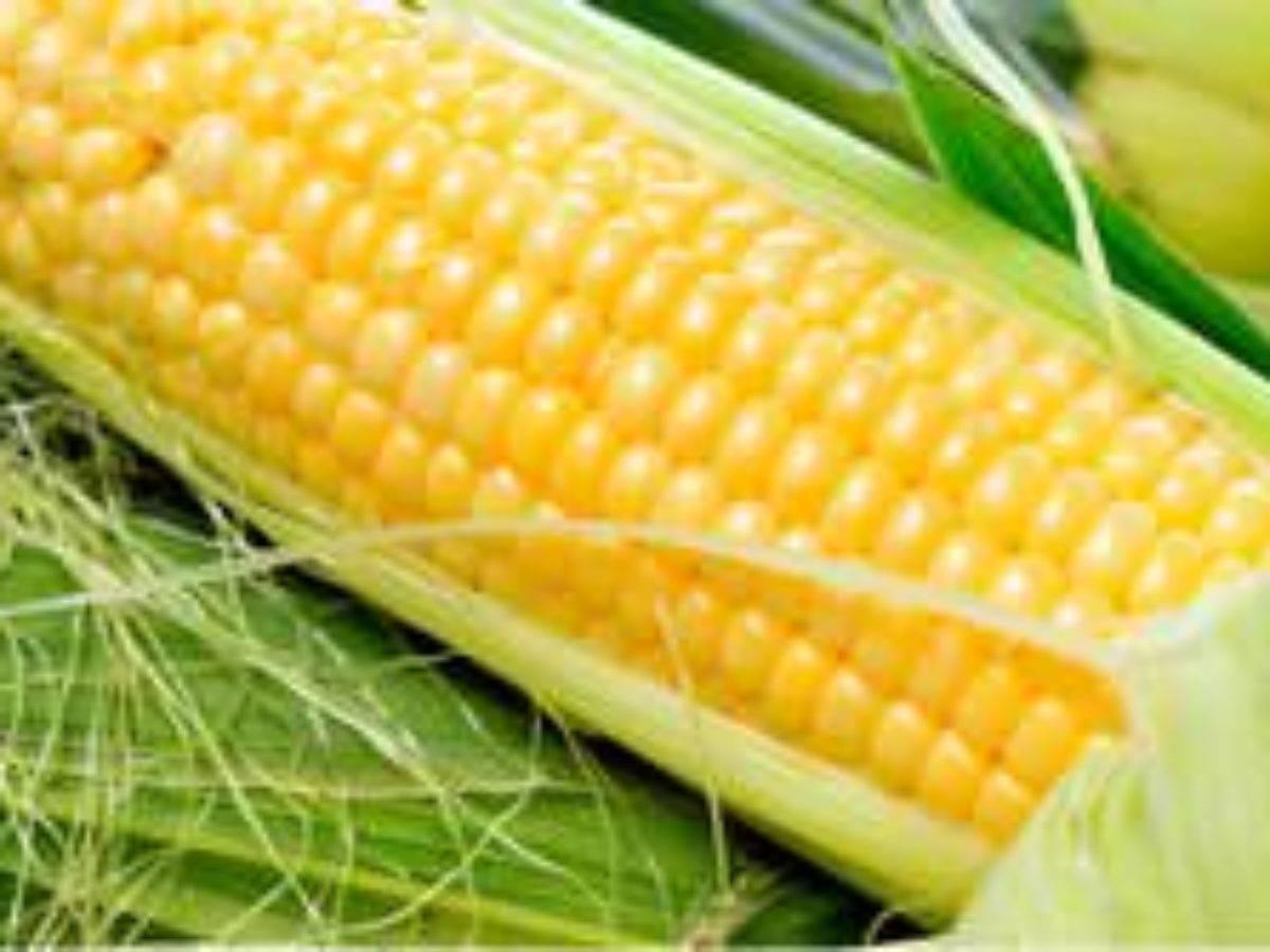 Кукуруза на зиму в домашних условиях. всё о том, как консервировать кукурузу в домашних условиях на зиму: лучшие рецепты