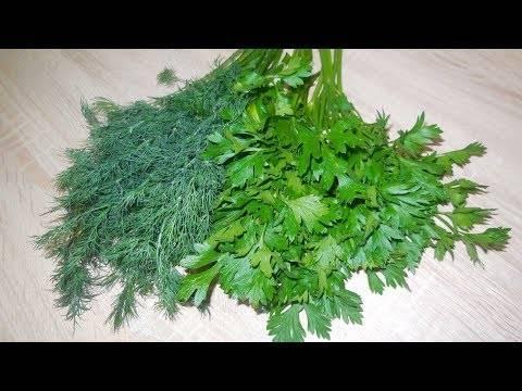 Как сохранить зелень в холодильнике, чтобы оставалась свежей: описание способов