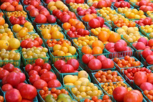 Какие урожайные сорта томатов лучше сажать для ленинградской области