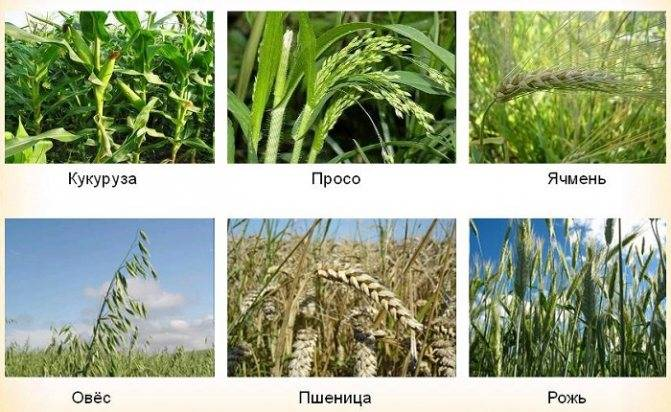 Сорняки и сорные растения — как бороться с сорняками на участке