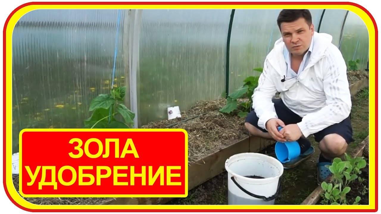 5 действенных шагов как использовать золу в огороде
