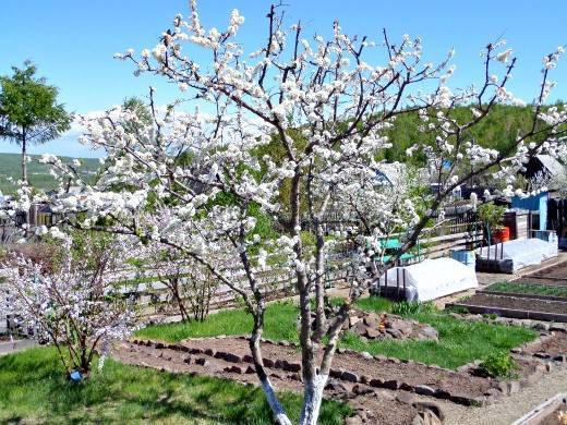 Работы в саду на даче в апреле