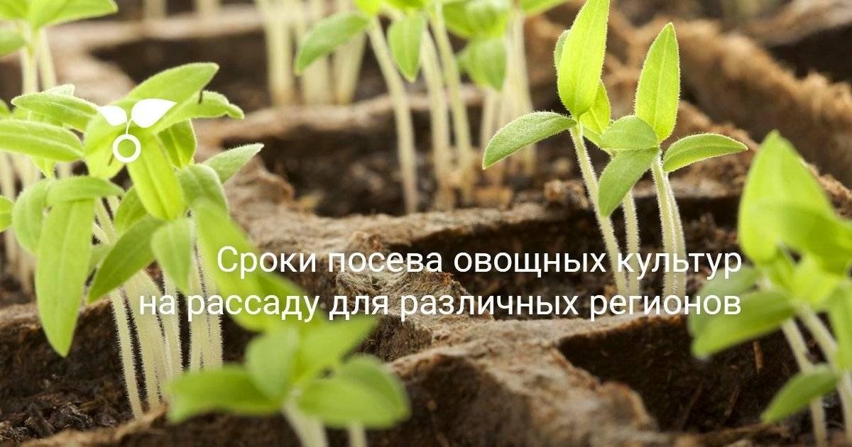 Какую рассаду сажают дачники Урала и Подмосковья в феврале?
